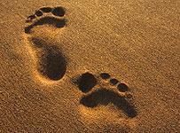 credit-check-footprint